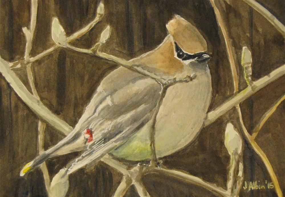 """Cedar Waxwing"" original fine art by Jane Albin"