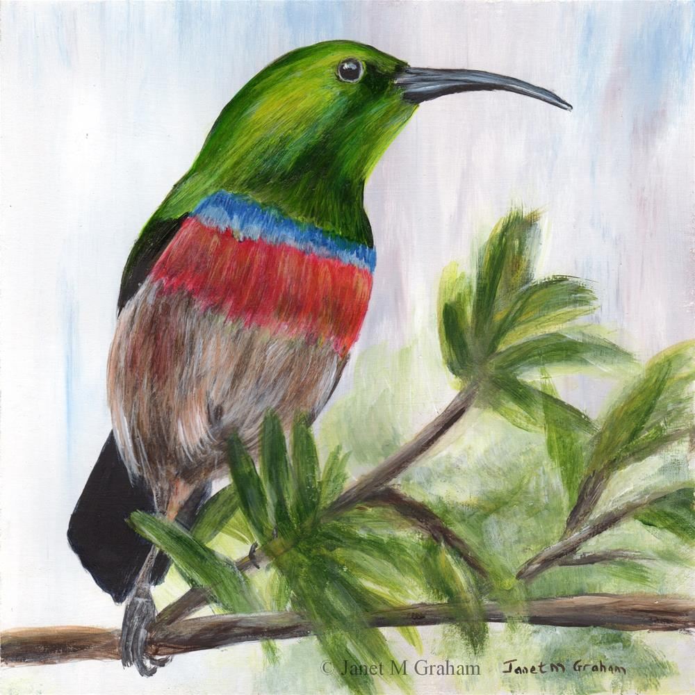 """""""Southern Double Collared Sunbird"""" original fine art by Janet Graham"""
