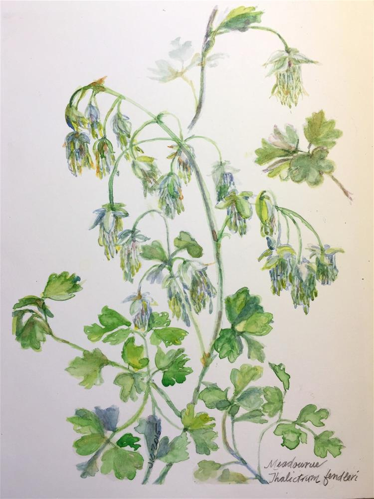 """Meadowrue - Thalictrum fendleri"" original fine art by Jean Krueger"