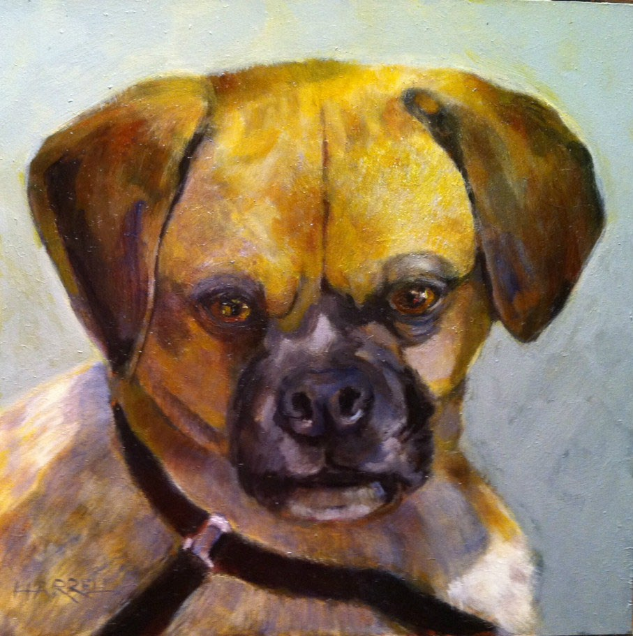 """Oliver"" original fine art by Sue Harrell"