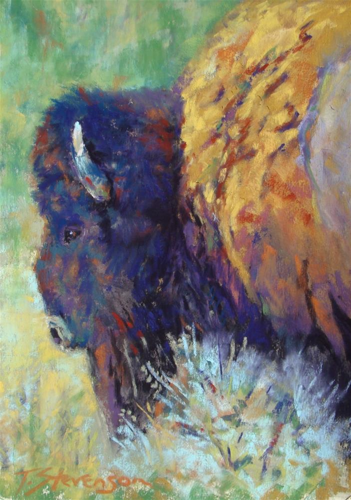 """Bison Afternoon"" original fine art by Trish Stevenson"