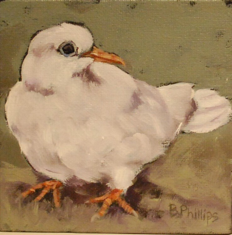 """White dove"" original fine art by Beverley Phillips"