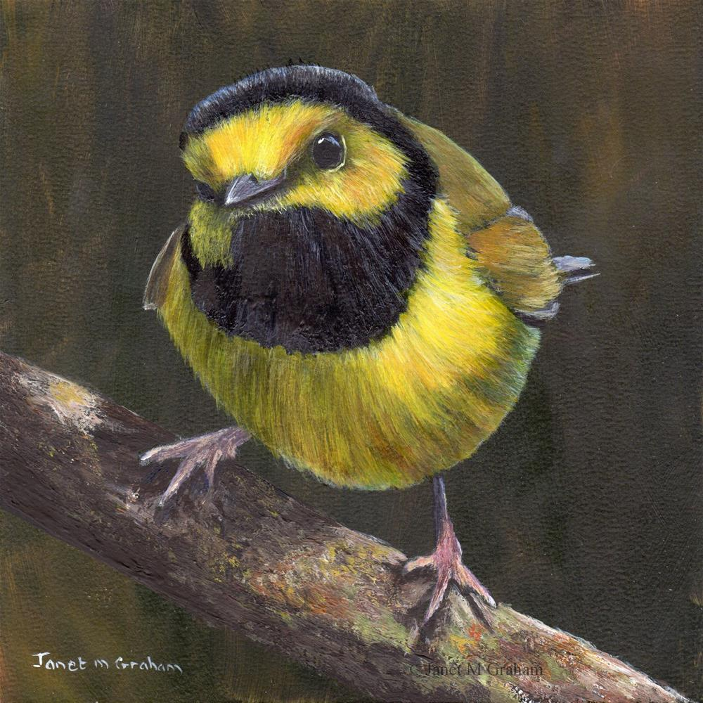 """Hooded Warbler"" original fine art by Janet Graham"