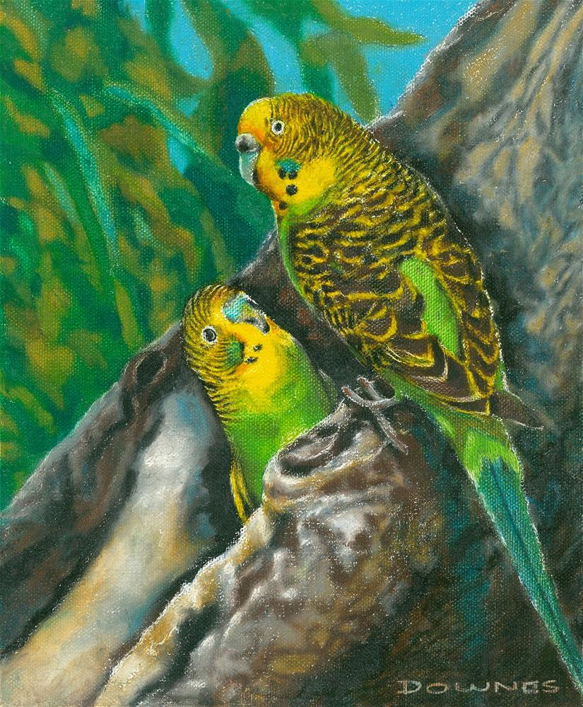 """148 BUDGERIGAR"" original fine art by Trevor Downes"