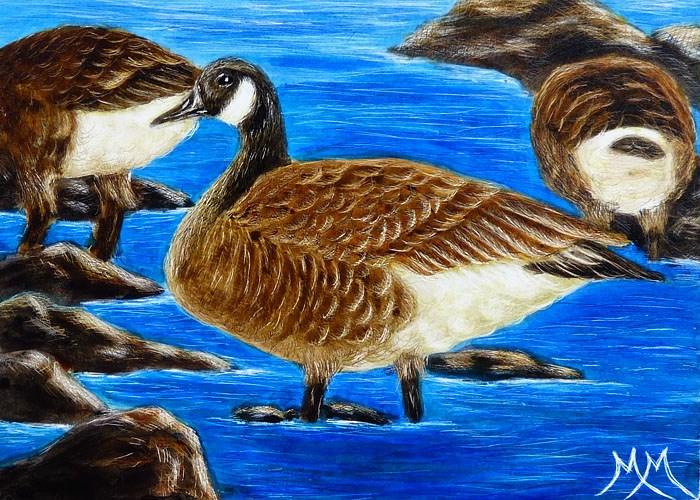 """""""Canada Geese"""" original fine art by Monique Morin Matson"""