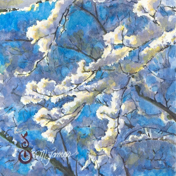 """Snowy Branches in the Sunlight #1"" original fine art by Catherine M. James"