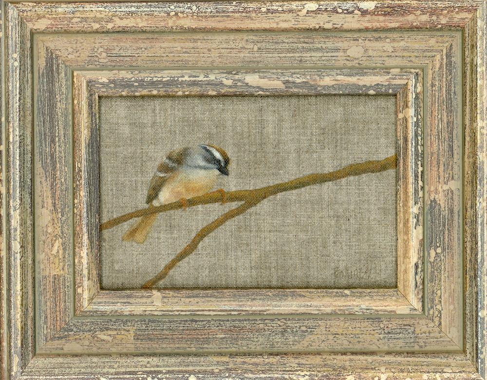 """""""Chipping Sparrow II"""" original fine art by Susanne Billings"""