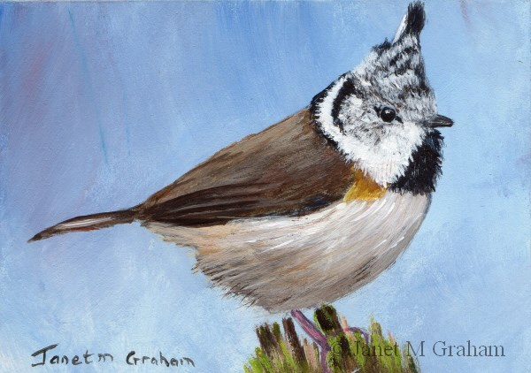 """Crested Tit ACEO"" original fine art by Janet Graham"
