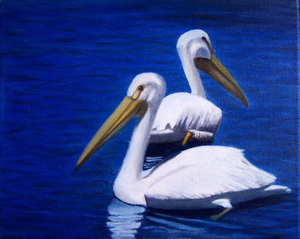 """White Pelicans"" original fine art by John Marcum"