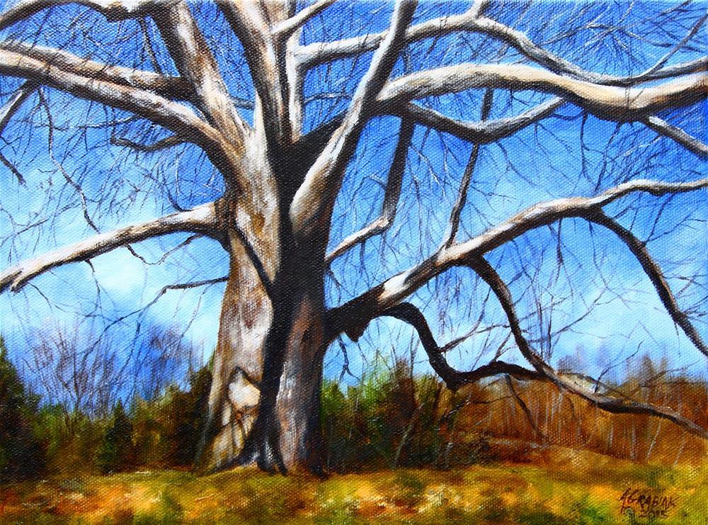 """American Sycamore"" original fine art by Aaron Grabiak"