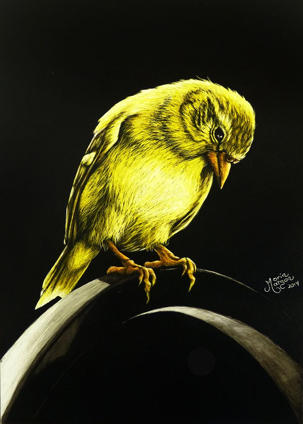 """American Gold Finch"" original fine art by Monique Morin Matson"