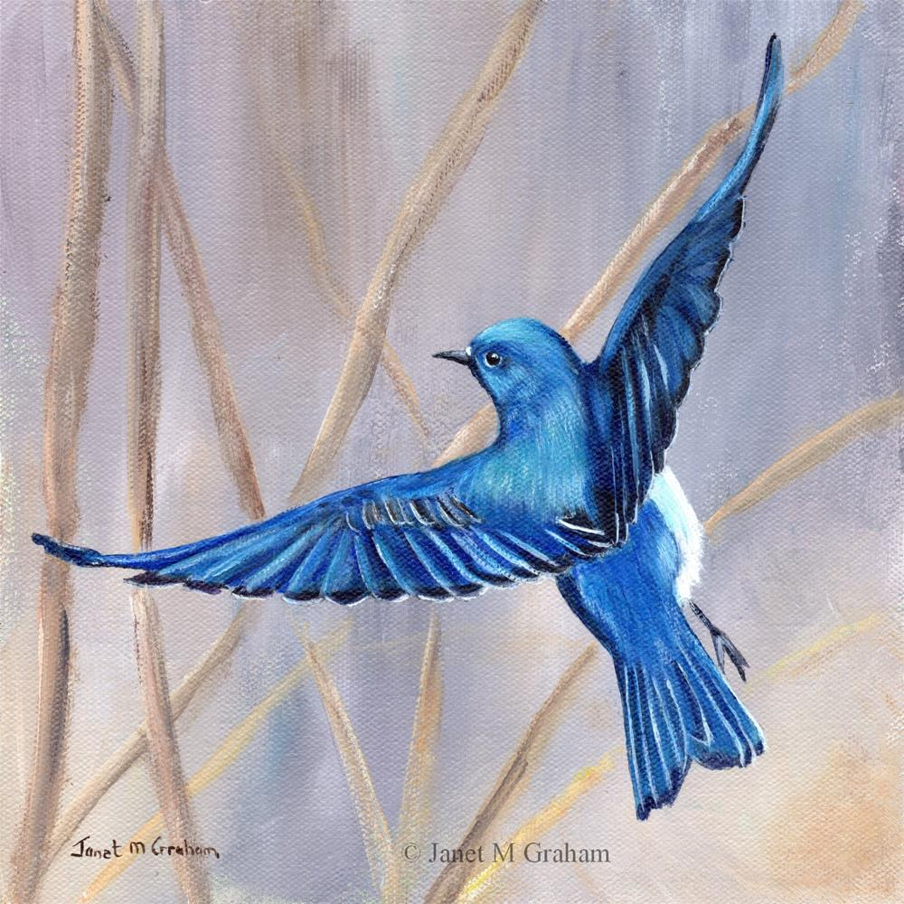 """Mountain Bluebird"" original fine art by Janet Graham"