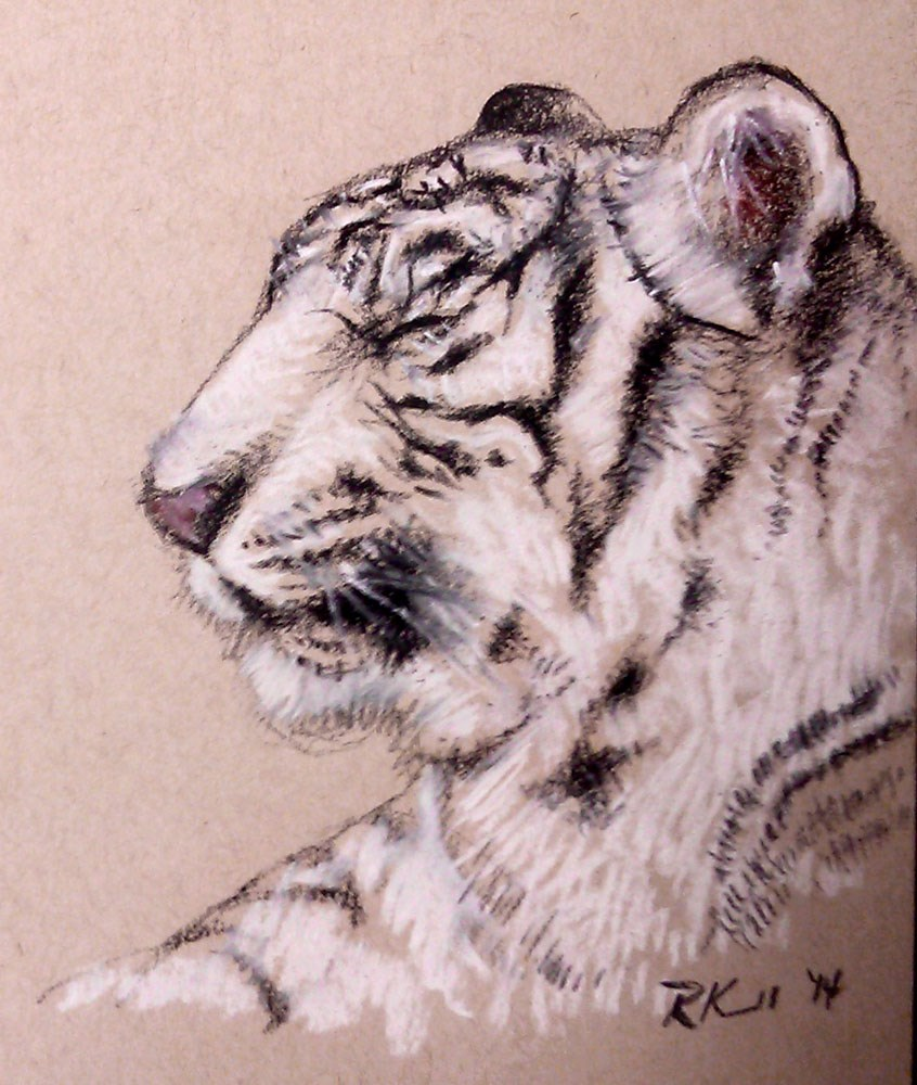 """White Tiger"" original fine art by Bob Kimball"