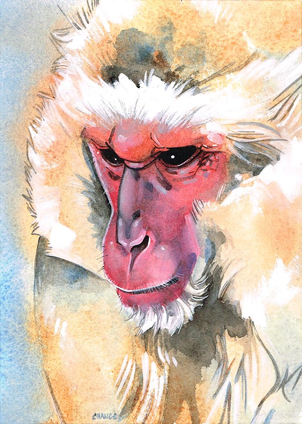 """""""No. 48 Japanese Macaque"""" original fine art by Annabel Chance"""