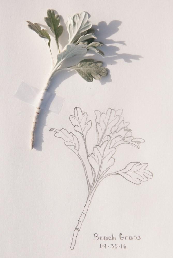 """Daily Sketch: Beach Wormwood"" original fine art by Debbie Lamey-Macdonald"
