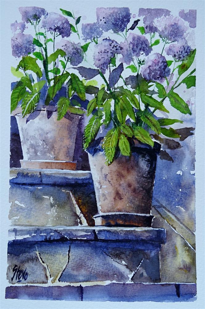 """Kirik's Hydrangeas"" original fine art by Martin Stephenson"