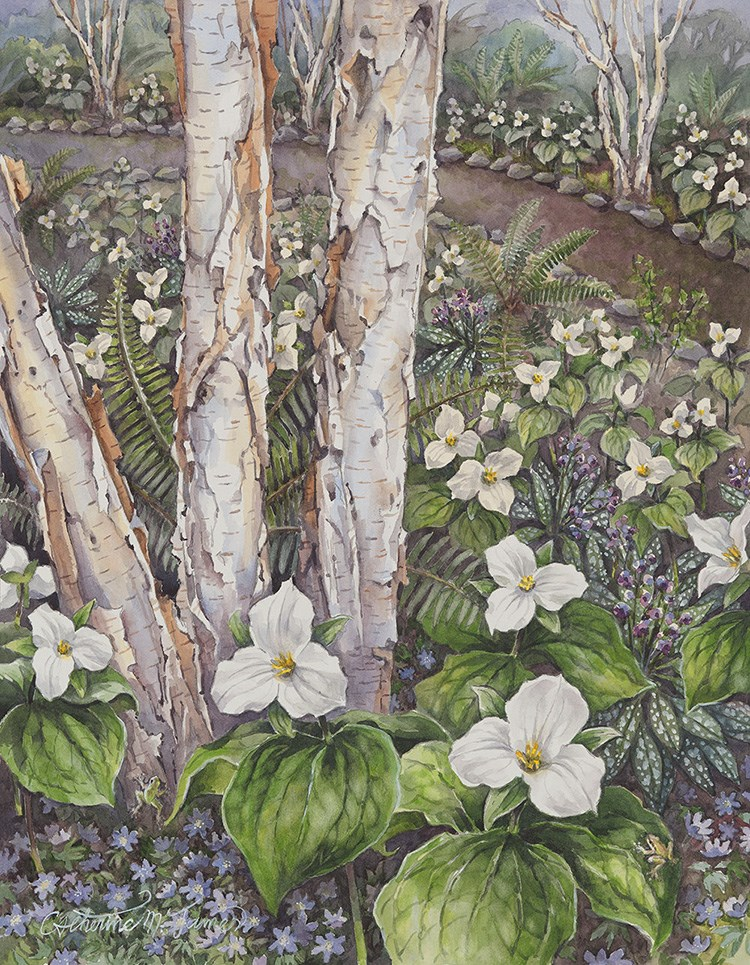 """Trillium grandiflorum in Birch Meadow"" original fine art by Catherine M. James"