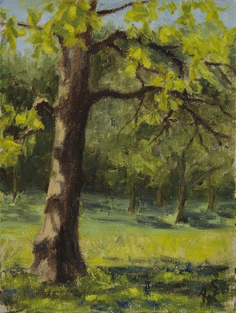 """""""Tree in State Park 2016"""" original fine art by Rachel Steely"""