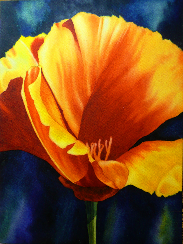 """California Poppy Study (Master Study)"" original fine art by Arena Shawn"