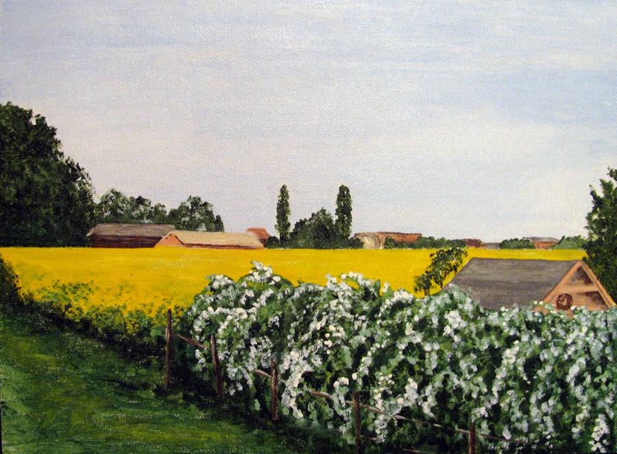 """Fields of Yellow"" original fine art by Nan Johnson"