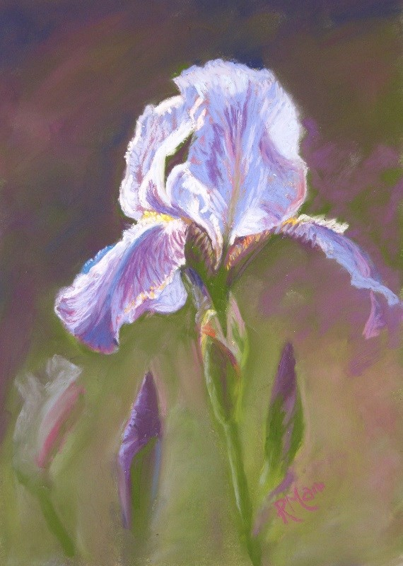 """Iris"" original fine art by Ruth Mann"