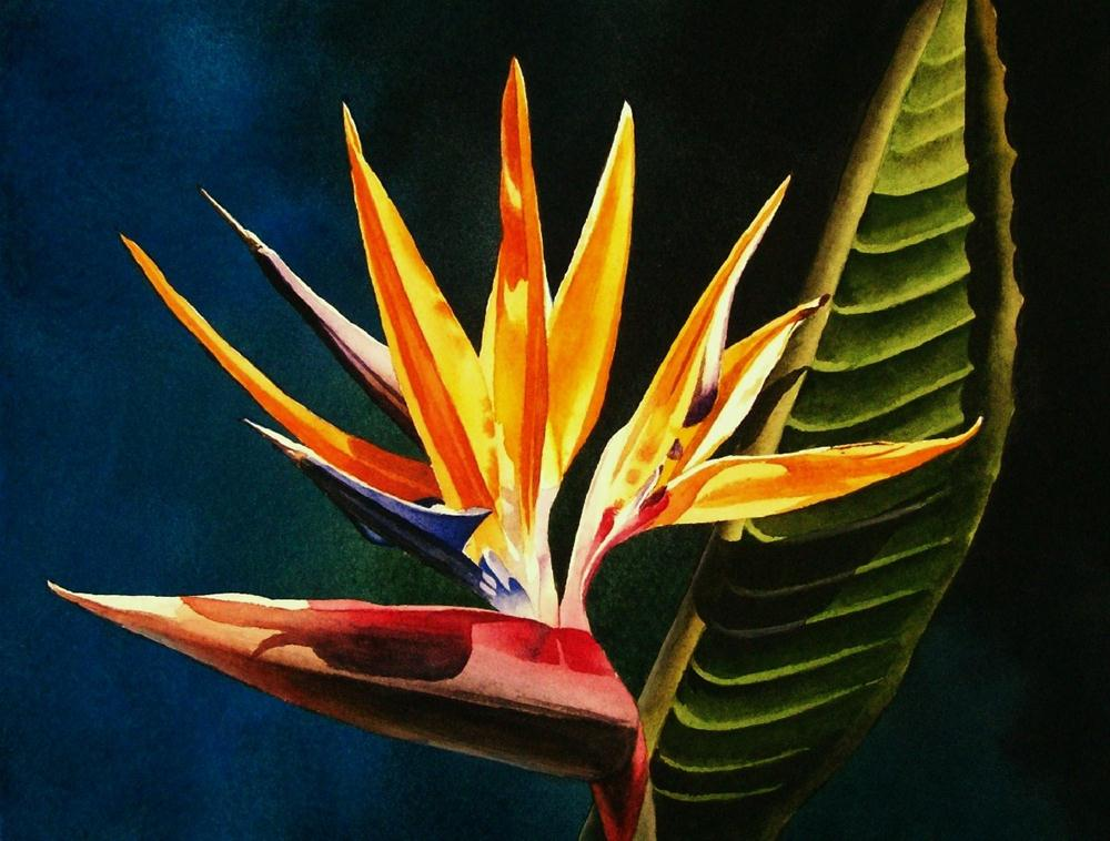 """Bird of Paradise"" original fine art by Jacqueline Gnott, whs"