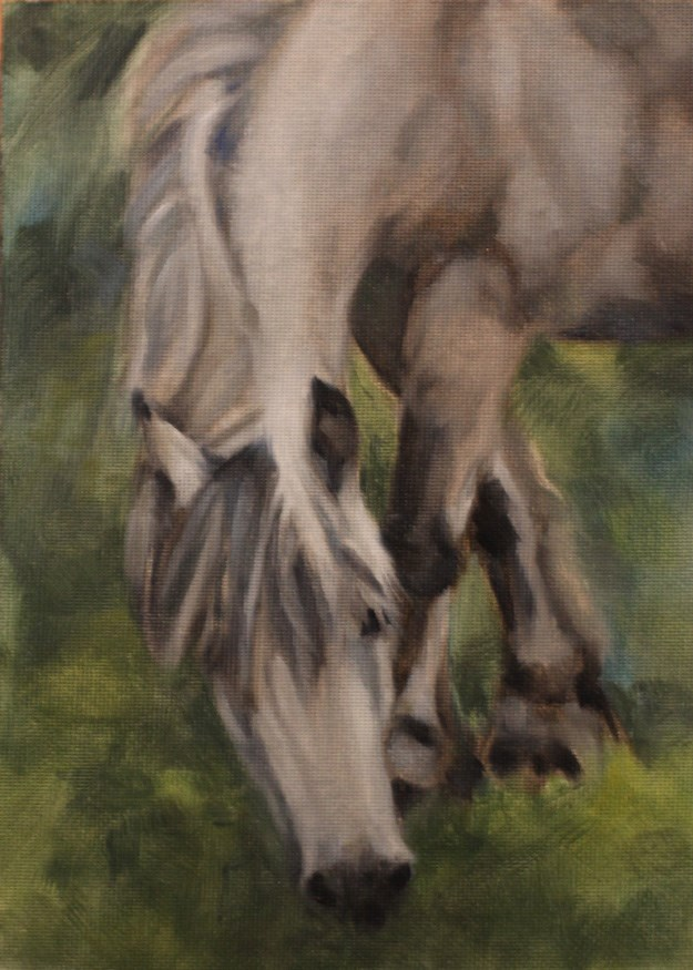 """Grazing Gray"" original fine art by Pamela Poll"