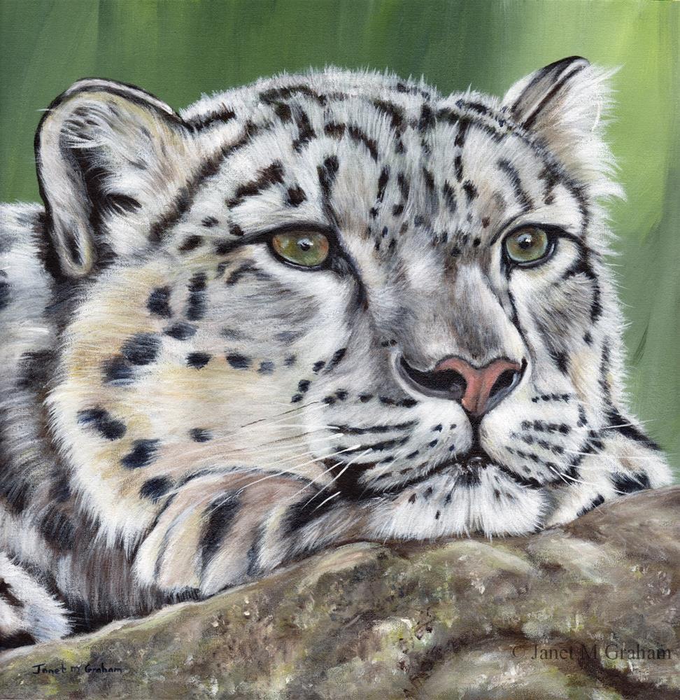 """Snow Leopard 2"" original fine art by Janet Graham"