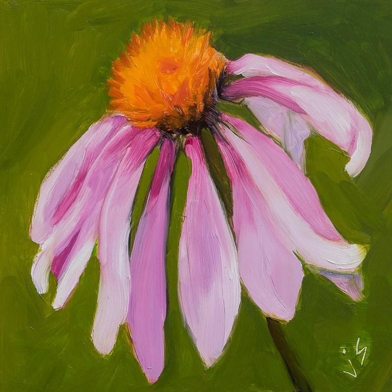 """Coneflower"" original fine art by Johnna Schelling"
