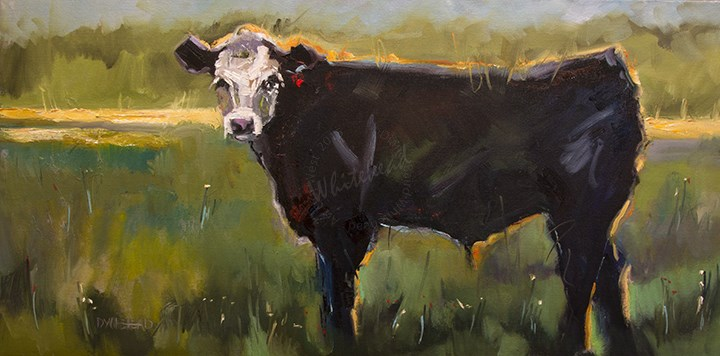 """Artoutwest Cow Cattle art oil painting Been A While!"" original fine art by Diane Whitehead"