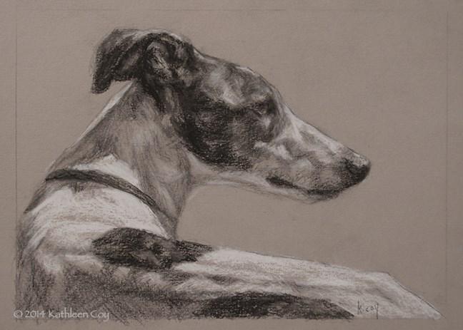 """""""49 - Greyhound"""" original fine art by Kathleen Coy"""