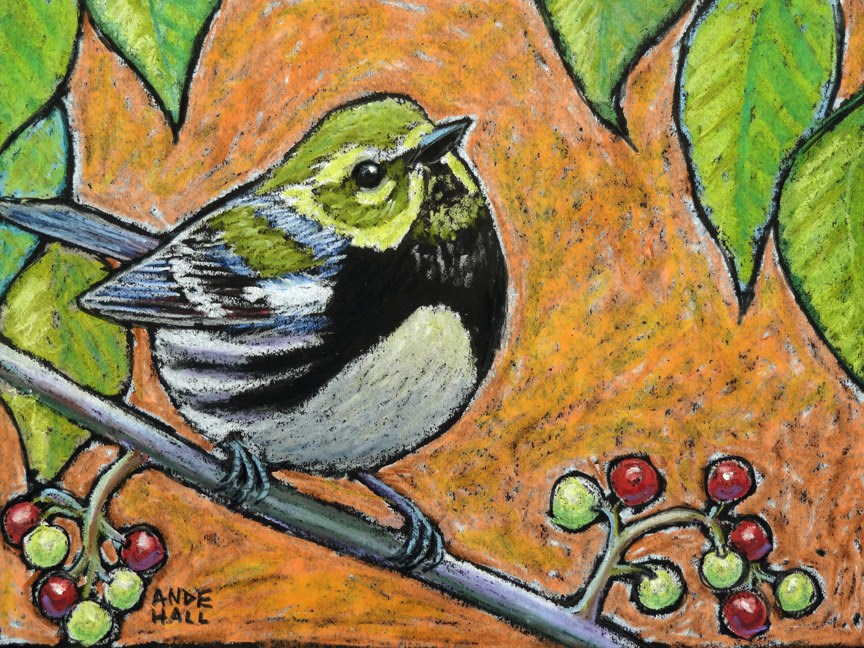 """Black Throated Green Warbler"" original fine art by Ande Hall"