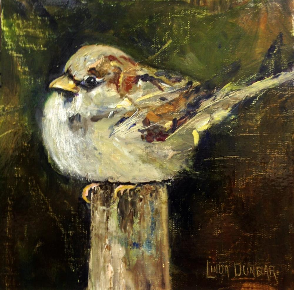 """The Eye of the Sparrow"" original fine art by Linda Dunbar"