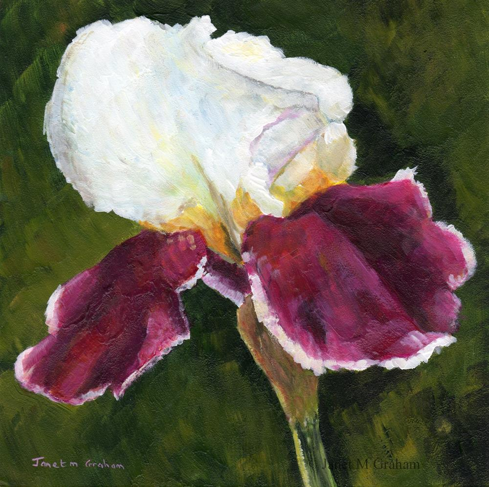 """Iris"" original fine art by Janet Graham"
