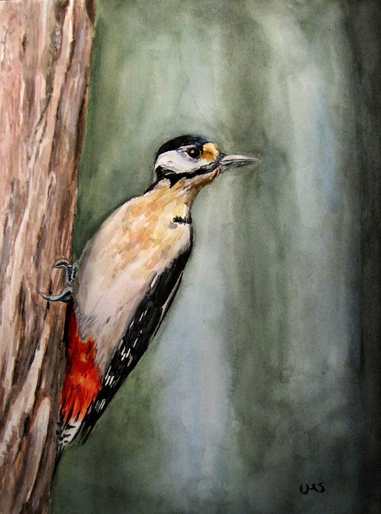 Great Spotted Woodpecker original fine art by Ulrike Miesen-Schuermann