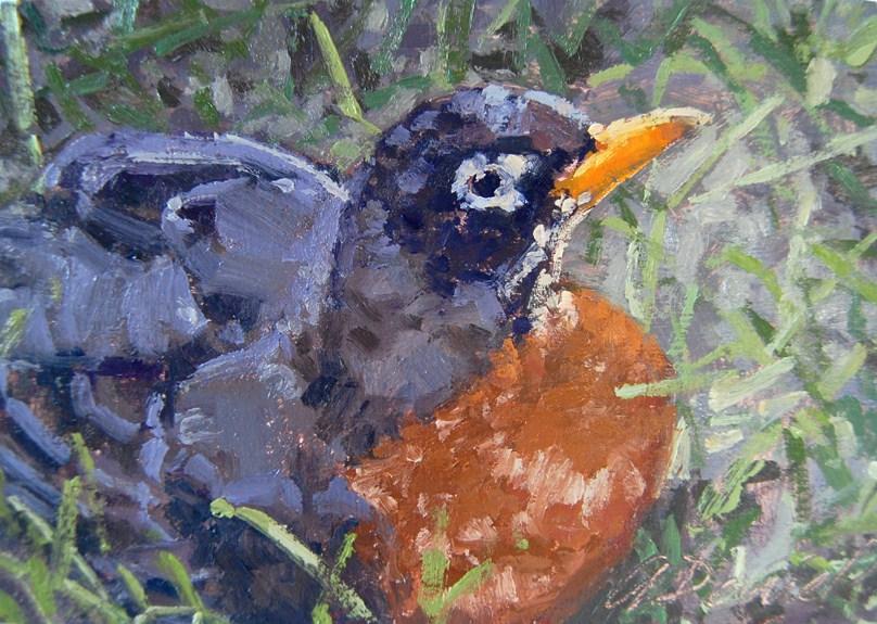 """Robin Resting"" original fine art by Andrew Daniel"