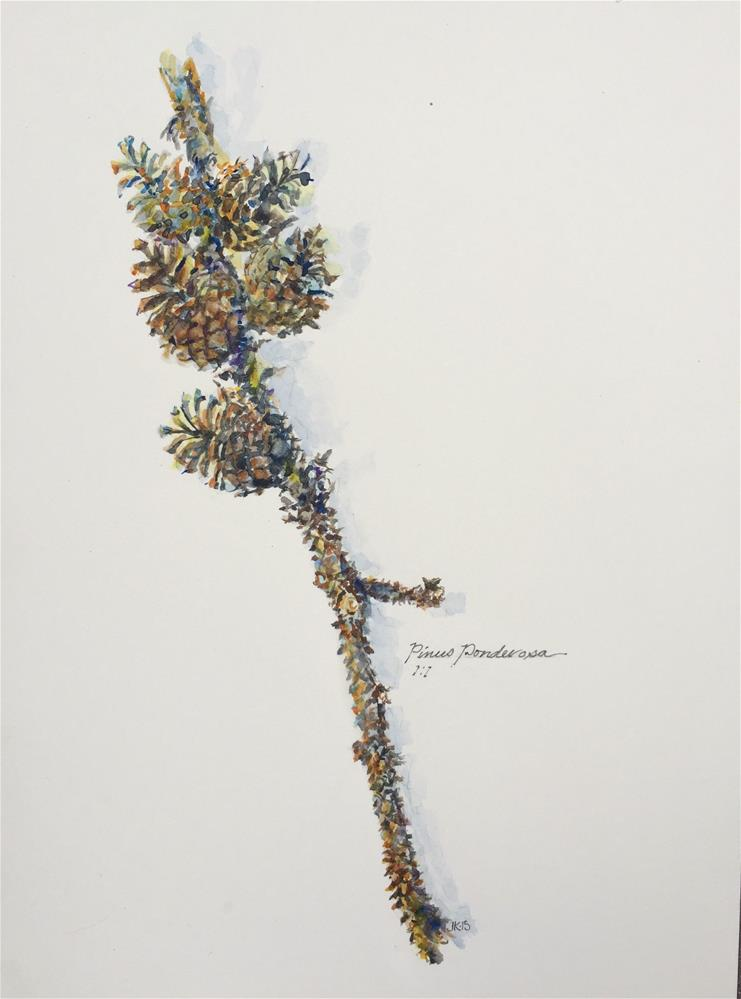 """Pine Branch - Pinus Ponderosa"" original fine art by Jean Krueger"