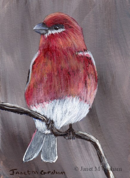 """Pine Grosbeak ACEO"" original fine art by Janet Graham"