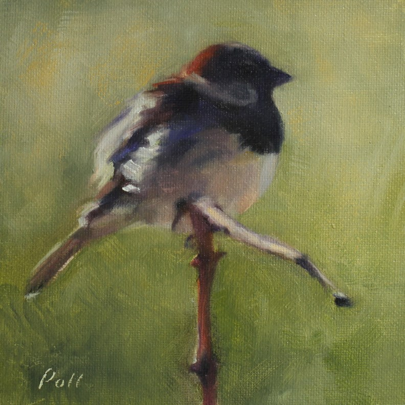 """Sparrow On a Broken Vine"" original fine art by Pamela Poll"