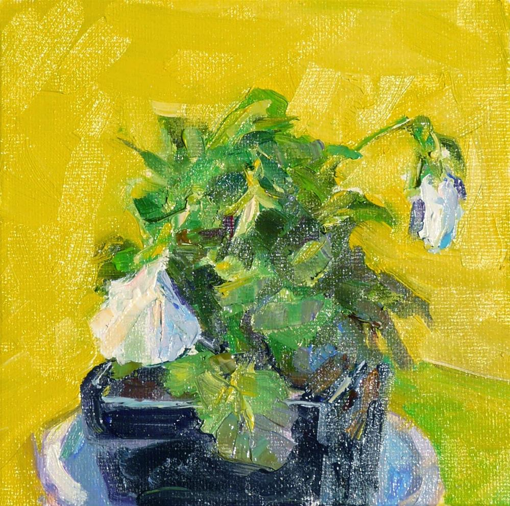"""Last White Pansies,still life,oil on canvas,6x6,price$200"" original fine art by Joy Olney"
