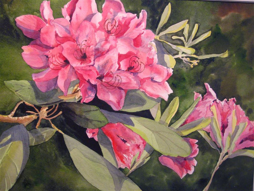 """Rhododendron"" original fine art by Judith Freeman Clark"