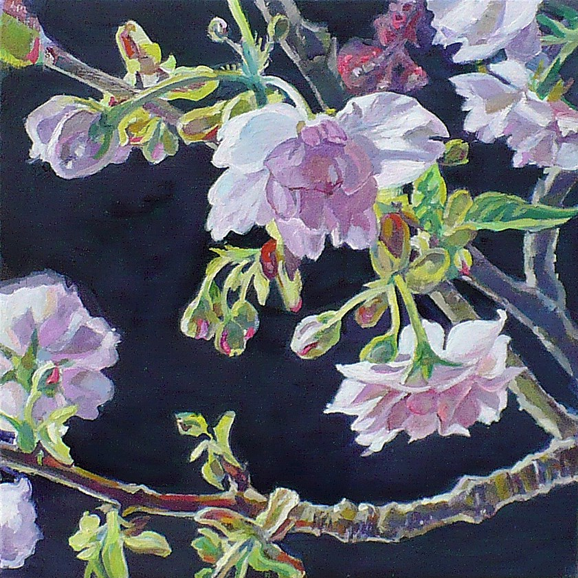 """Cherry blossoms"" original fine art by Nicoletta Baumeister"