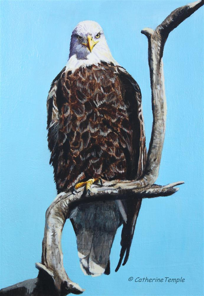 """Stare Down-Bald Eagle"" original fine art by Catherine Temple"