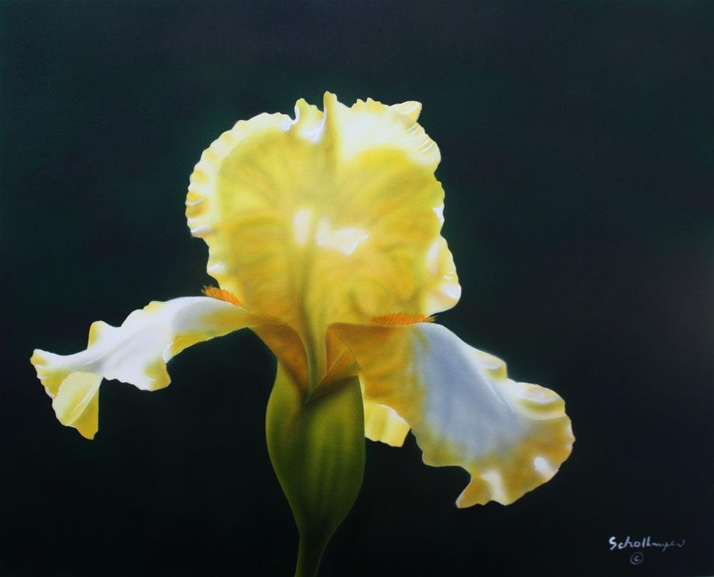 """Phaedra's Iris"" original fine art by Fred Schollmeyer"