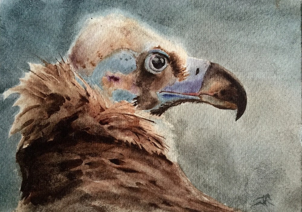 """Eurasian Black Vulture"" original fine art by June Rollins"