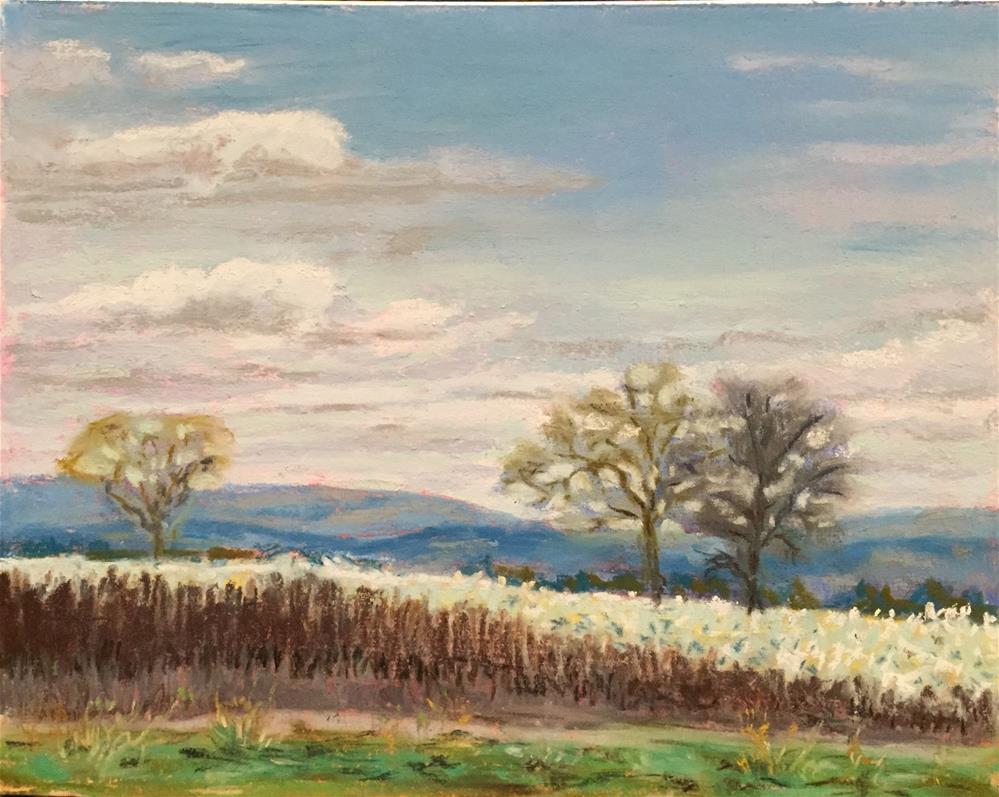 """Field in bloom"" original fine art by Natasha Ramras"