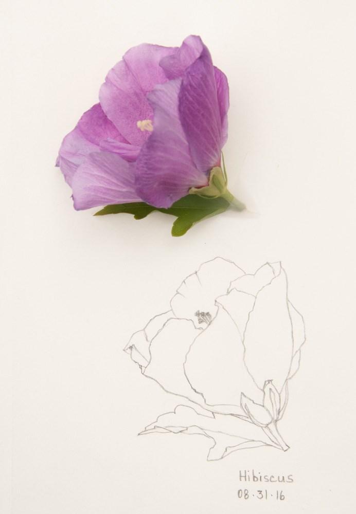 """Daily Sketch: Hibiscus"" original fine art by Debbie Lamey-Macdonald"