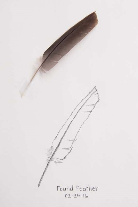 """Daily Sketch: Found Feather"" original fine art by Debbie Lamey-Macdonald"