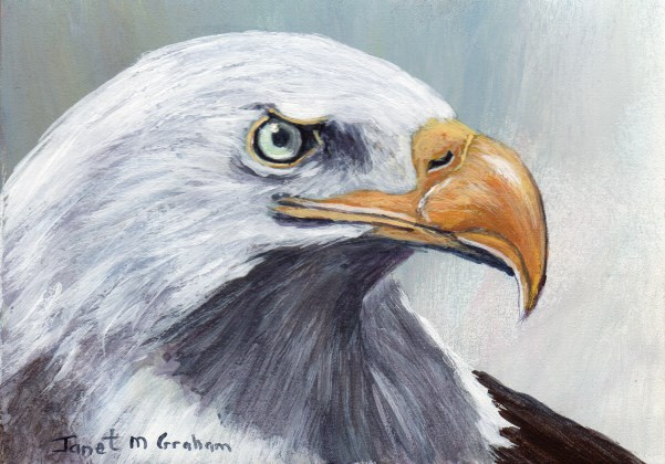 """Bald Eagle ACEO"" original fine art by Janet Graham"