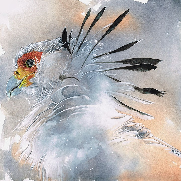 """No. 49 Secretary Bird"" original fine art by Annabel Chance"